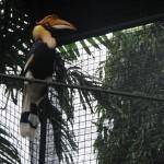 الطائر الماليزي حديقة الطيور في جزيرة لنكاوي ماليزيا