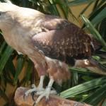 حديقة الطيور في جزيرة لنكاوي ماليزيا