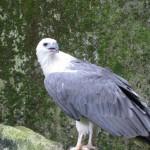 نسر لنكاوي حديقة الطيور في جزيرة لنكاوي ماليزيا