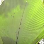 في حديقة التوابل في جزيرة بينانج