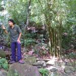 المرشد في حديقة التوابل في جزيرة بينانج