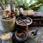 بعض انواع التوابل و البهارات في حديقة التوابل في بينانج