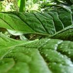 قطرات الماء على اوراق الشجر في حديقة التوابل في جزيرة بينانج