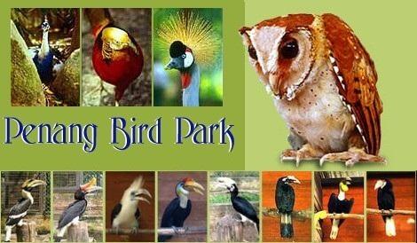 صورة رمزيه لحديقة الطيور في بينانج