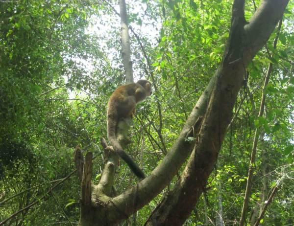 صور من حديقة الحيوانات الصغيرة