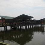 مكان العناية بالغوريلا و القرود في جزيرة الغوريلا في بينانج
