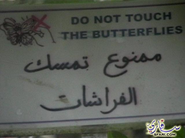 لوحة توضع انه ممنوع لمس الفراشات في الحديقة
