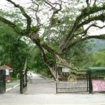 مدخل الحديقة في حديقة النباتات و الزهور في بينانج