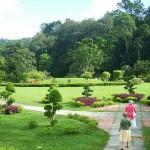ممرات داخل الحديقة في حديقة النباتات و الزهور في بينانج