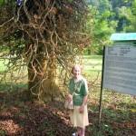 امرأه واقفه امام شجرة عتيقة في حديقة النباتات و الزهور في بينانج