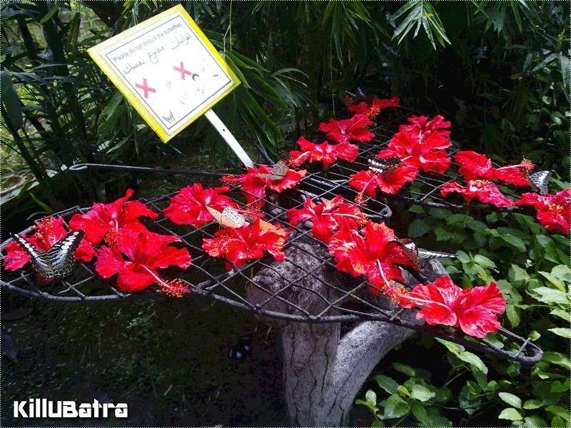 لوحة ممنوع لمس الفراشات في الحديقة