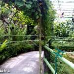 ممرات داخل الحديقة في حديقة الفراشات في بينانج