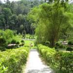 ممرات داخل الحديقة