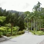 ممرات حديقة النباتات في حديقة النباتات و الزهور في بينانج