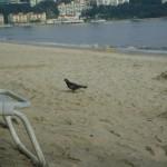 صورة من الشاطئ فندق فلامينقو في بينانج