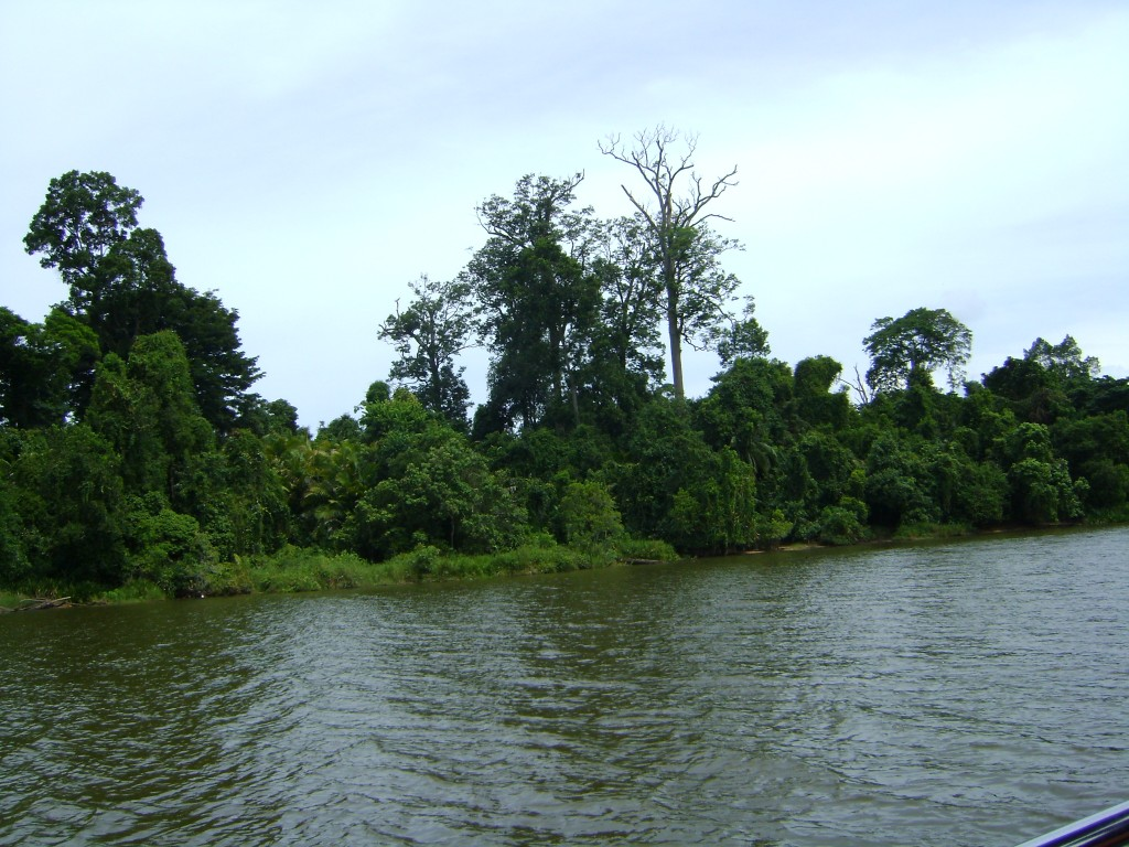 صور من القارب في الغوريلا في بينانج