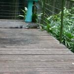حيوان زاحف في جزيرة الغوريلا في بينانج