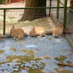 بعض الحيوانات في جزيرة الغوريلا في بينانج