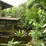 من داخل حديقة الحيوانات و الطيور في جزيرة الغوريلا في بينانج