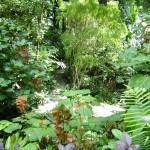 نباتات و اشجار في حديقة التوابل في جزيرة بينانج