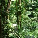 اشجار عتيقة في حديقة التوابل في جزيرة بينانج