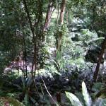 اشجار و نباتات في حديقة التوابل في جزيرة بينانج
