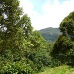 من حديقة الفواكة في بينانج