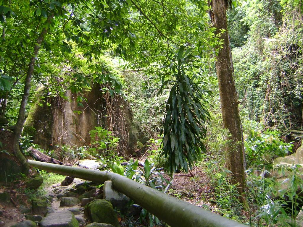 في شلالات بينانج