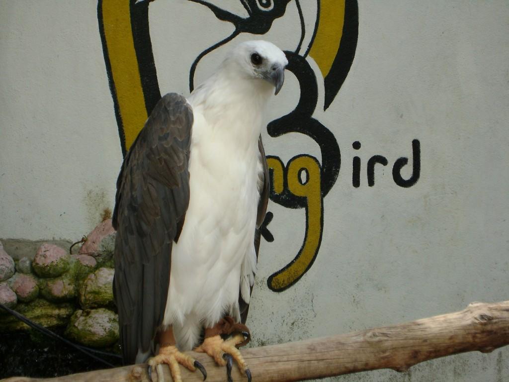 النسر في حديقة الطيور في بينانج