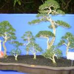 نباتات رائعة ونادرة في حديقة النباتات و الزهور في بينانج