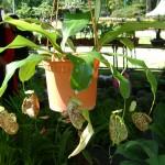 نباتات رائعة في حديقة النباتات و الزهور في بينانج