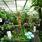 من داخل الحديقة في حديقة الفراشات في بينانج