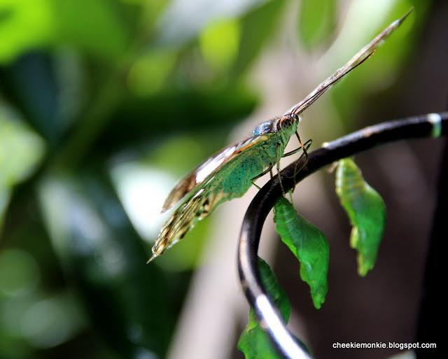 حشرة غريبة