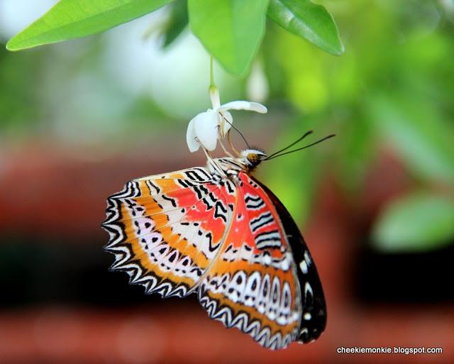 فراشة في حديقة الفراشات في بينانج