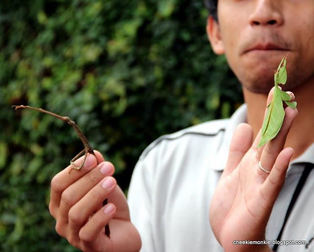 حشرات غريبة