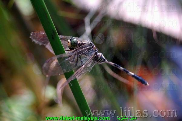 حشرة في حديقة
