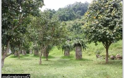 tropical fruit farm حديقة الفواكة في بينانج1