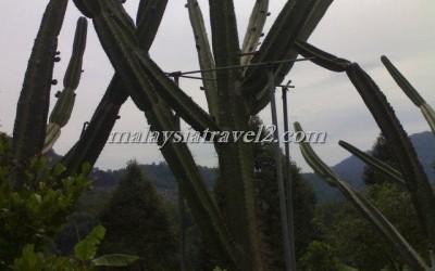 tropical fruit farm حديقة الفواكة في بينانج2
