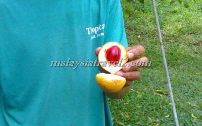 tropical fruit farm حديقة الفواكة في بينانج3