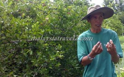 tropical fruit farm حديقة الفواكة في بينانج6