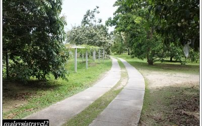 tropical fruit farm حديقة الفواكة في بينانج8