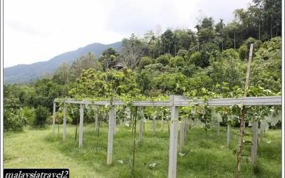 tropical fruit farm حديقة الفواكة في بينانج9