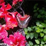 فراشات جميلة في حديقة الفراشات في بينانج