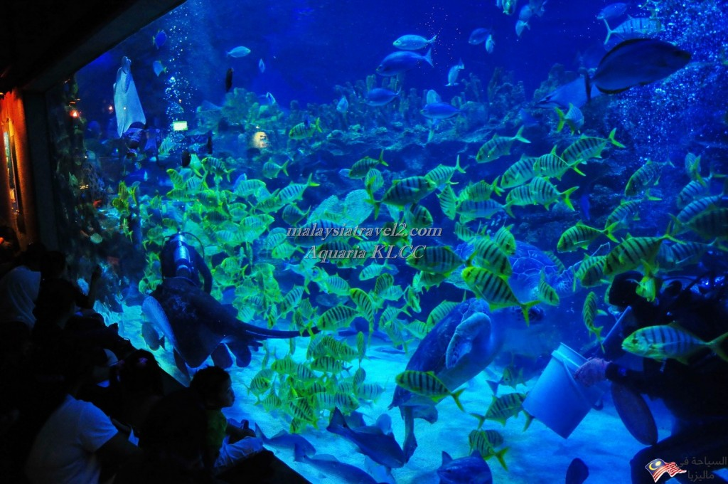 Aquaria_KLCC_fish_tank