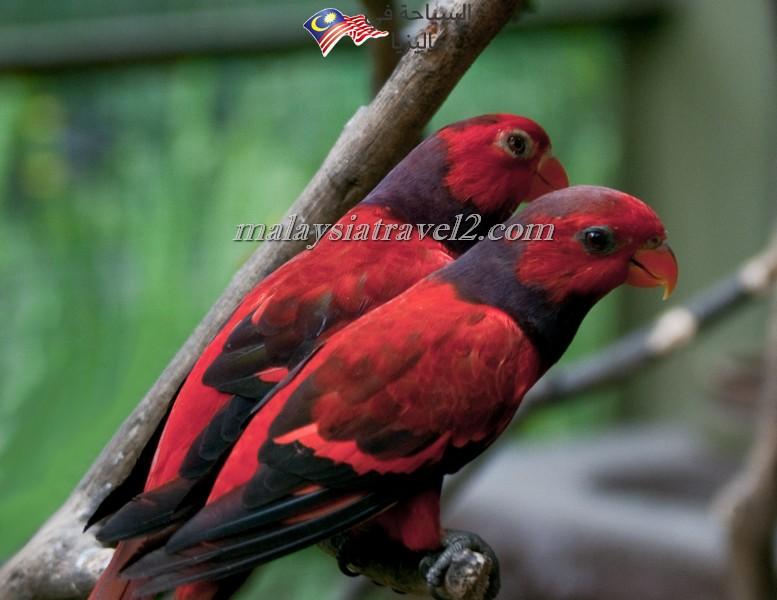 kl-bird-park10