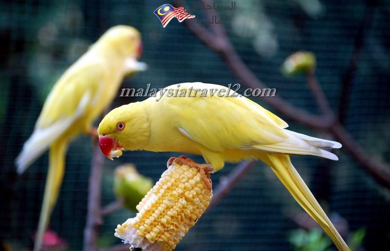 kl-bird-park14