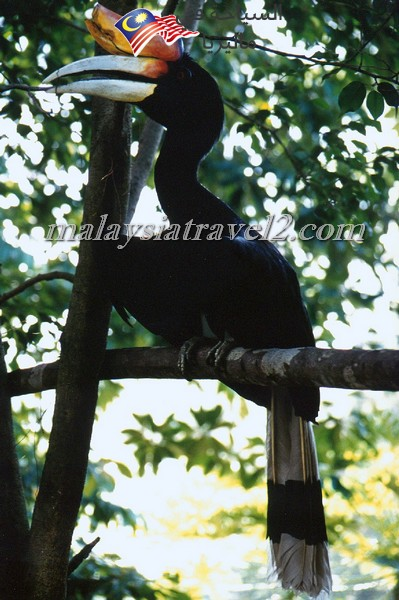 kl-bird-park16