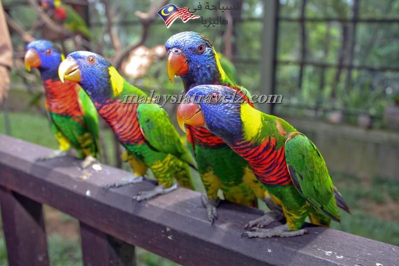 kl-bird-park19