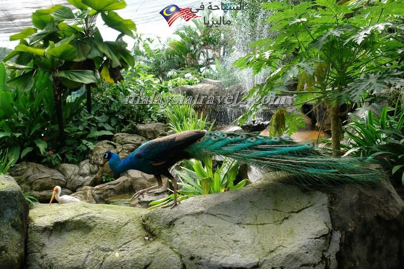 kl-bird-park21