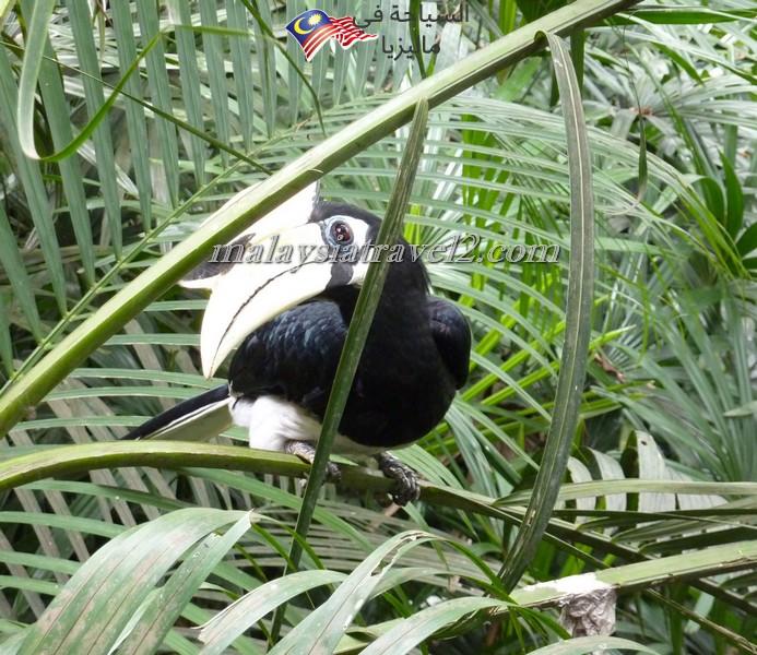 kl-bird-park6